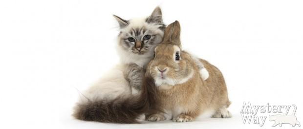 Восточный гороскоп - год кролика кота
