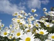 Весна - пора цветения