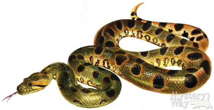 года по знаком зодиака змея