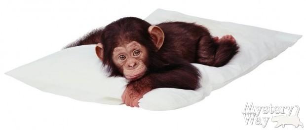 Китайский (восточный) гороскоп - год обезьяны