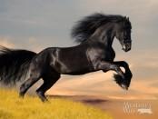 Восточный гороскоп год лошади