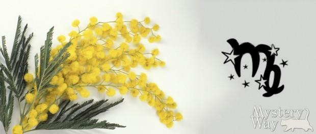 Гороскоп на март 2016 года для Девы