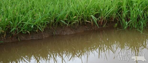 К чему снится грязная или мутная вода
