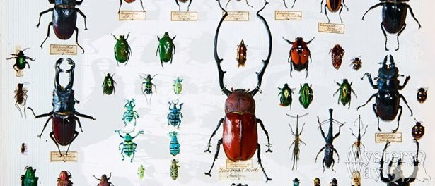 снятся жуки
