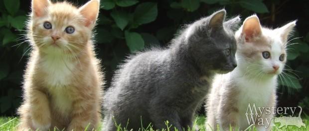 К чему снятся котята - маленькие и черные