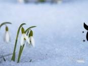 Телец апрель