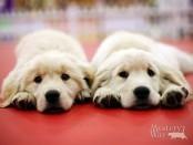 маленькие щенки
