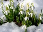 Раки апрель