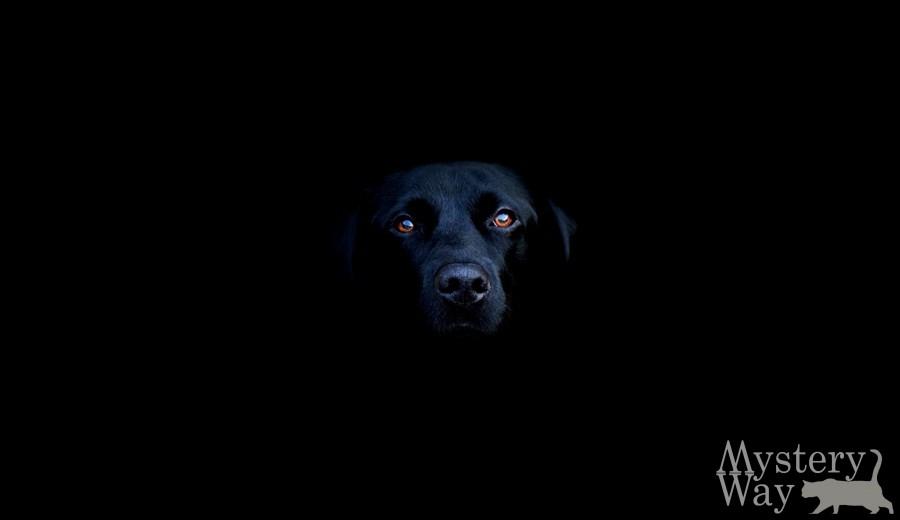 В соннике фрейда сказано, к чему снится чёрная собака.