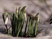 Весы апрель