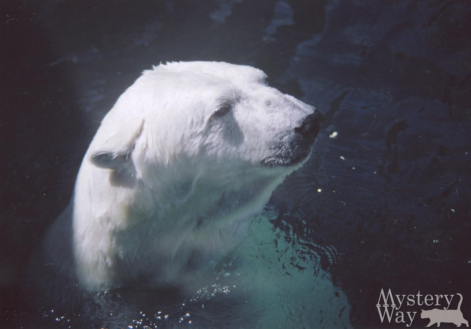 Белый медведь 2 15 фотография